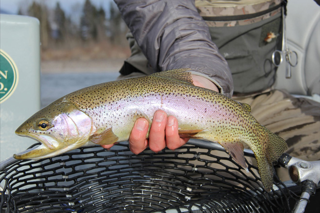 Cutthroat Trout in and near White River Missouri